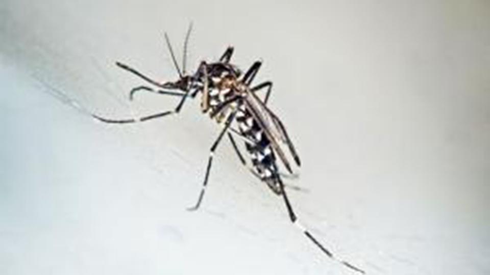 dengue_chikungunya-zika
